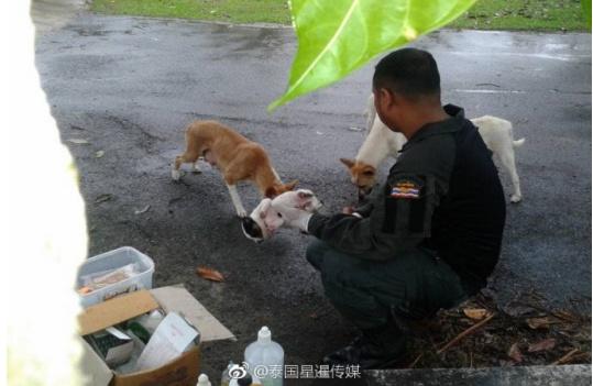 母狗叼着受伤小狗拦警车求救