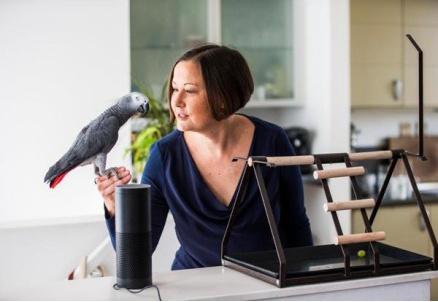 鹦鹉模仿主人声音 成功在网上下单买了一批礼品盒