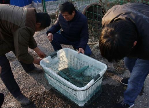 """农民自家池塘捞出50斤""""太岁"""" 专家估价超100万"""